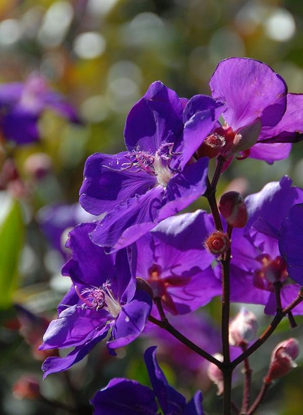 flowering ornnamentals